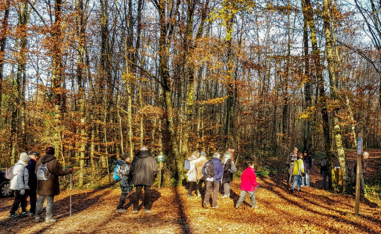 Forêt domaniale du Haut-Juré22/11/2018
