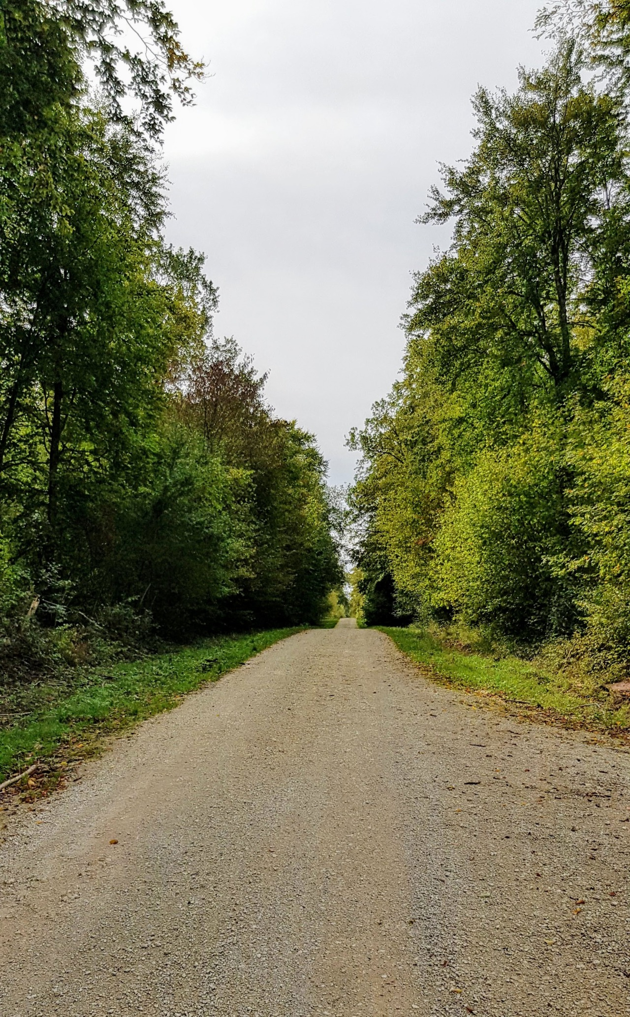 Forêt de Massonges le 03/10/2019
