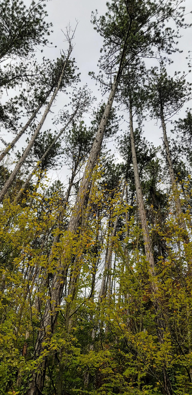 Dans la forêt de Salmagne, le10/10/2019