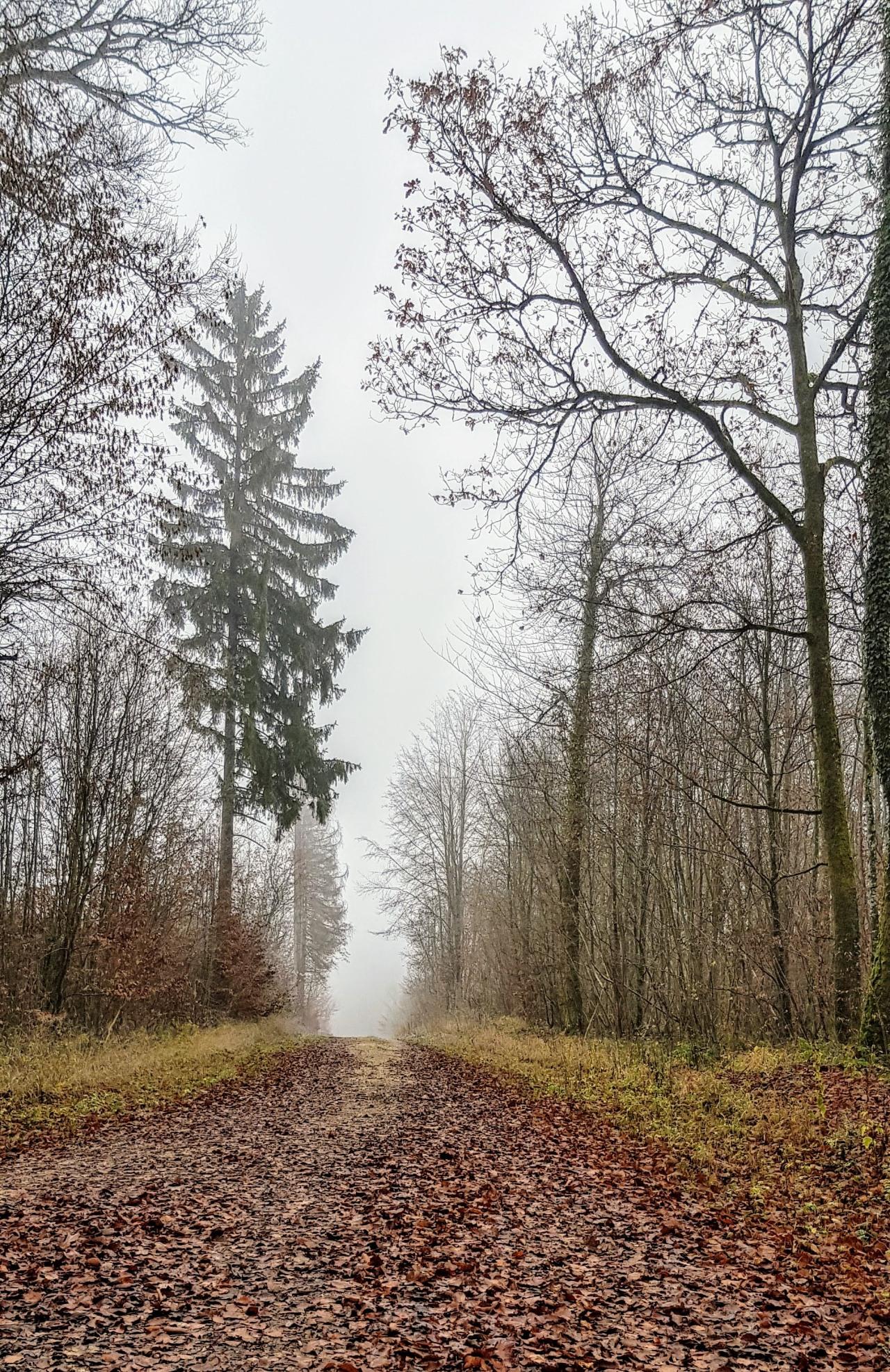 Marche dans la forêt du Haut Juré le05/12/2019
